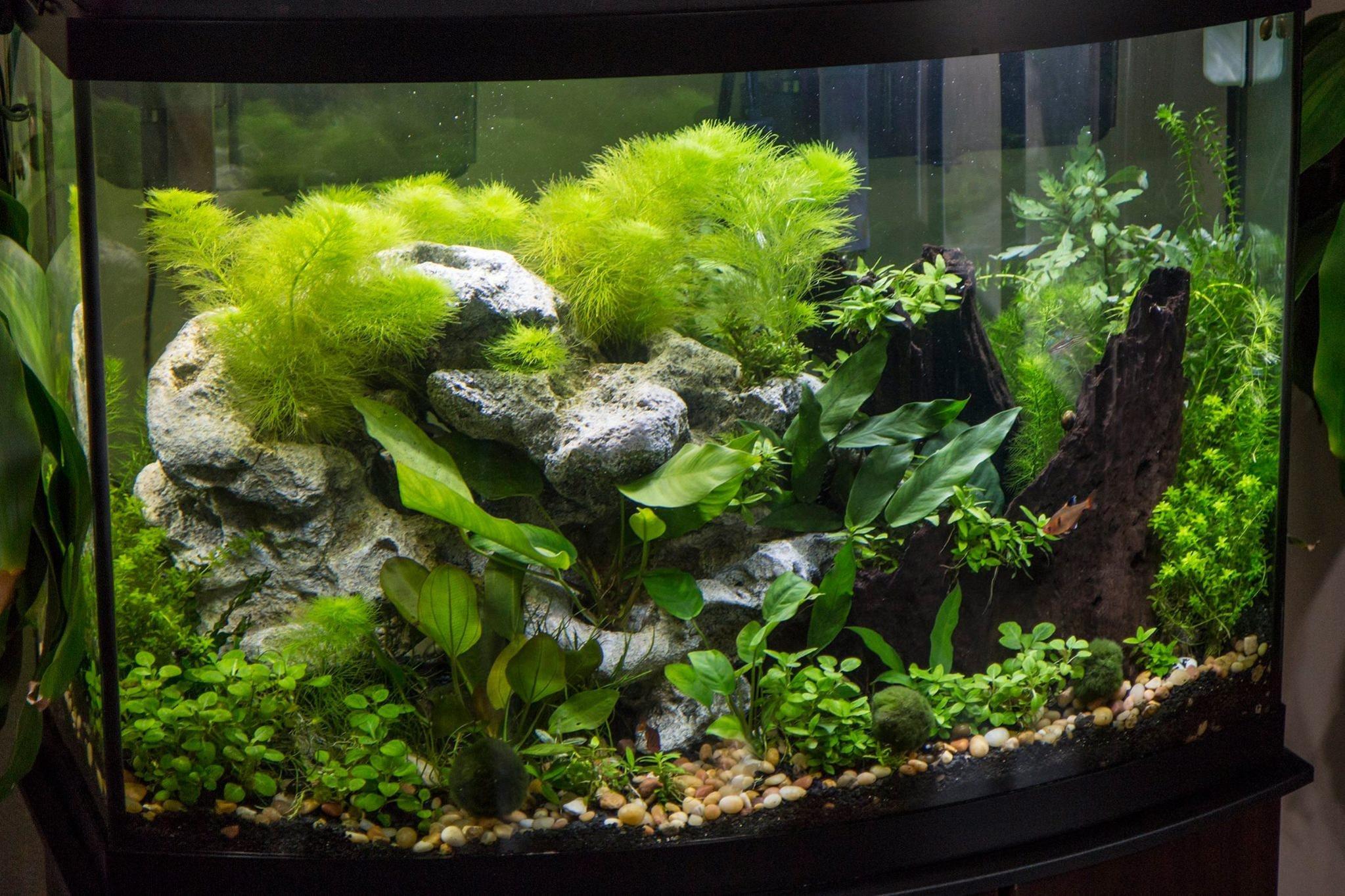 Flourish dosing chart too much General Aquarium Plants