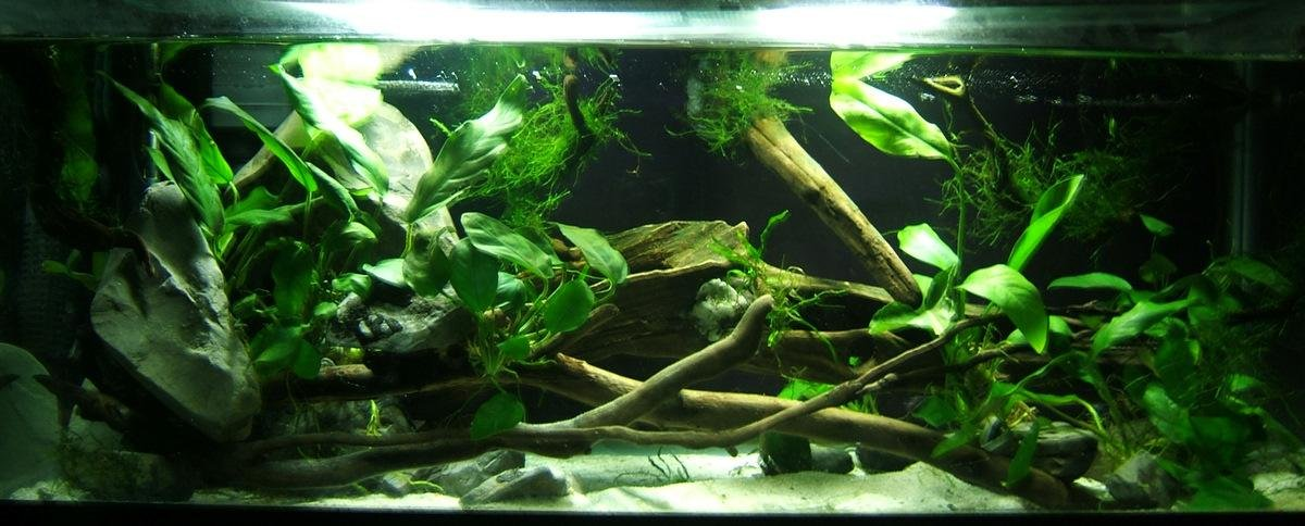 Click image for larger version  Name:20 long betta home.JPG Views:22 Size:103.4 KB ID:61139