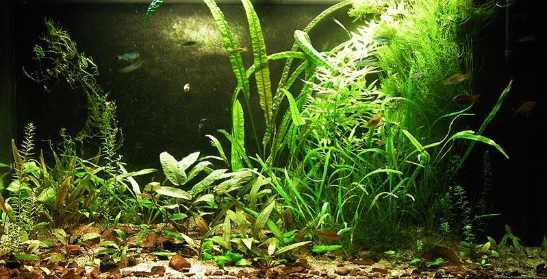 Click image for larger version  Name:aquarium.jpg Views:663 Size:130.9 KB ID:32026