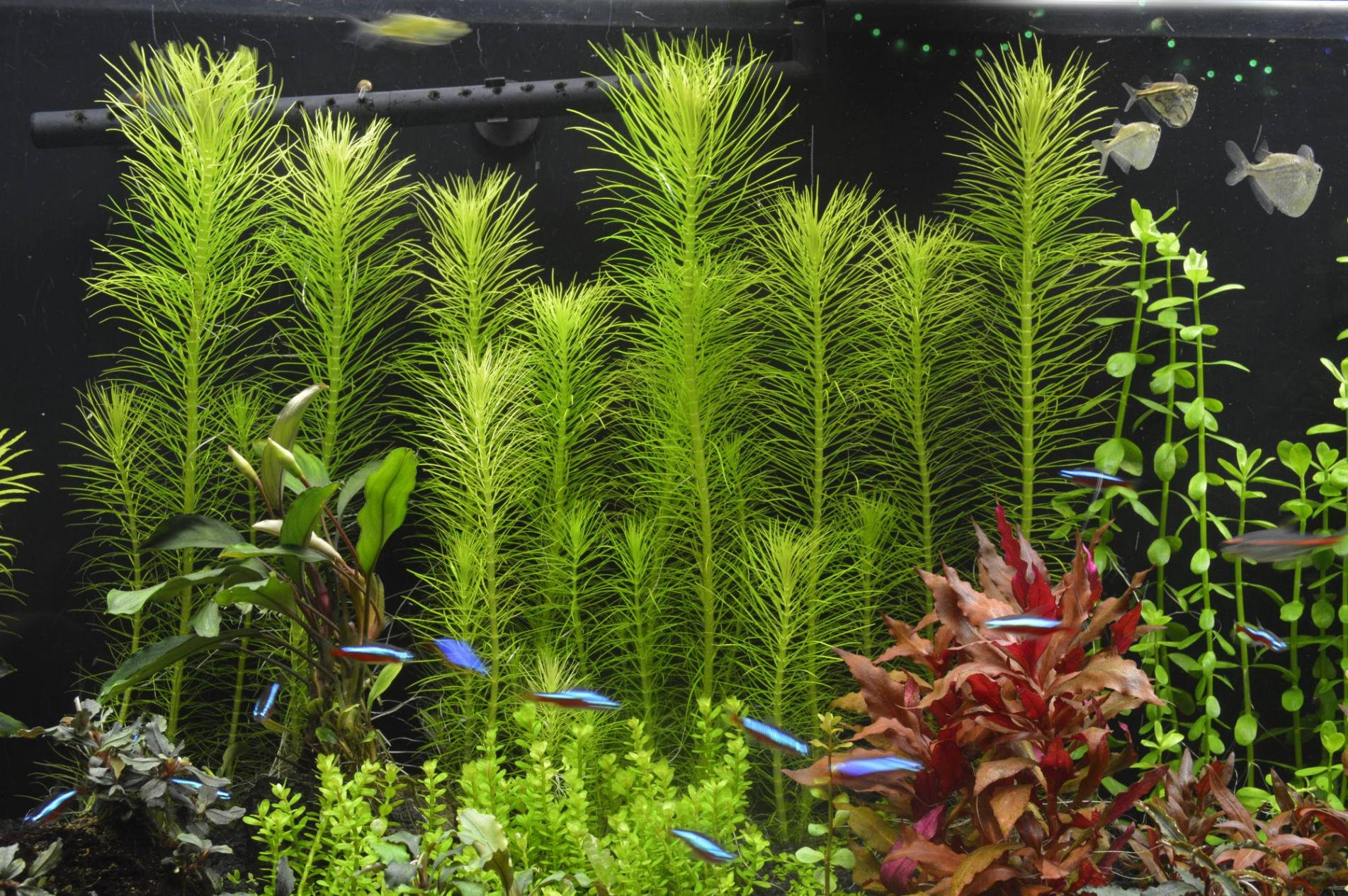 Click image for larger version  Name:BkgPlants.jpg Views:193 Size:502.1 KB ID:60129
