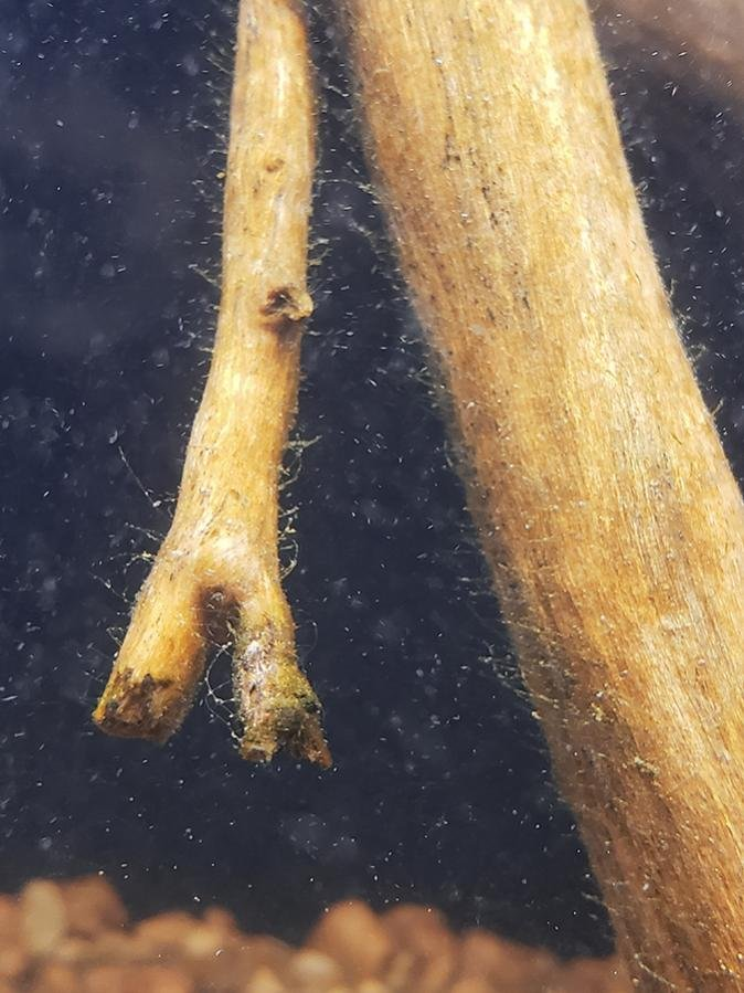 Click image for larger version  Name:Driftwood in 29.jpg Views:38 Size:85.6 KB ID:62673