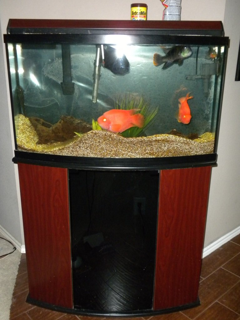 Click image for larger version  Name:fish tank 001.jpg Views:111 Size:213.2 KB ID:10892