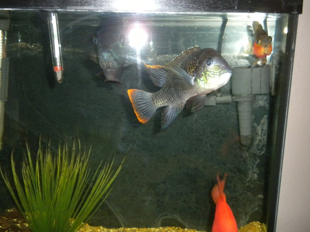 Click image for larger version  Name:fish tank 002.jpg Views:104 Size:214.8 KB ID:10893