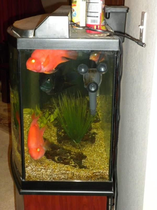 Click image for larger version  Name:fish tank 006.jpg Views:102 Size:147.5 KB ID:10895