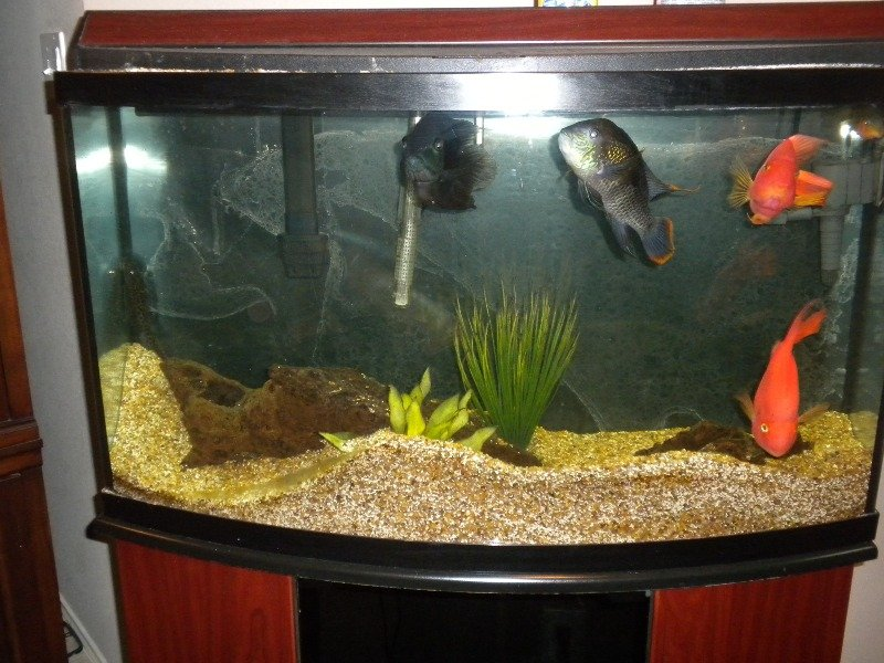 Click image for larger version  Name:fish tank 007.jpg Views:98 Size:155.1 KB ID:10896
