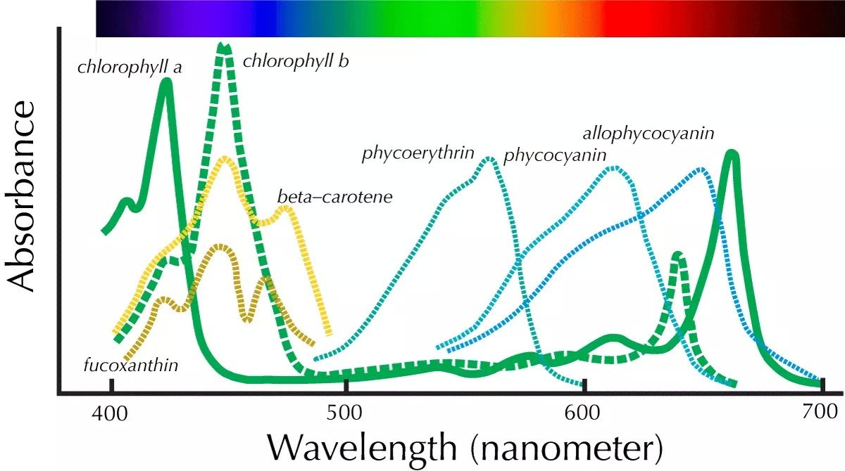 Click image for larger version  Name:Pigment_spectra.jpg Views:34 Size:138.5 KB ID:63137