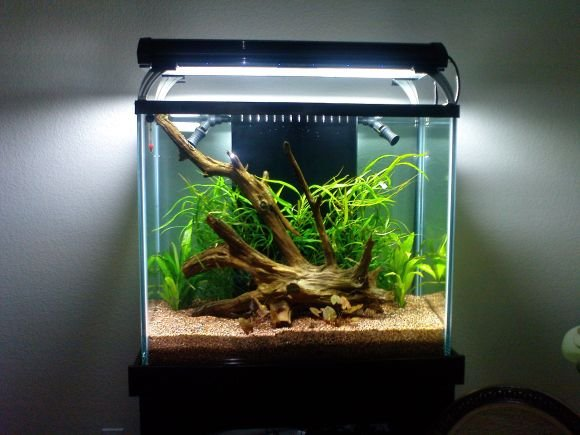 Click image for larger version  Name:planted discus 3.jpg Views:252 Size:65.4 KB ID:7708