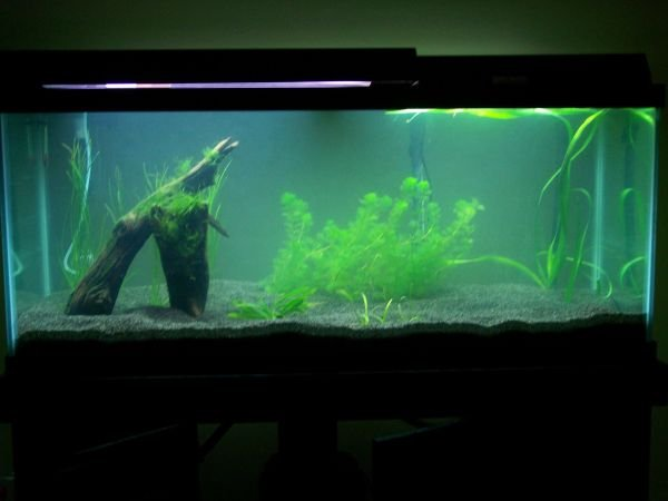 Click image for larger version  Name:Tank planted full.jpg Views:158 Size:37.0 KB ID:5035