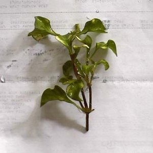 Unknown Plant Mugshot 1