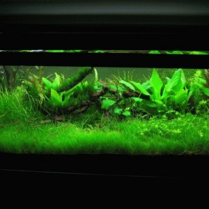Roybot's 20 Gallon Long