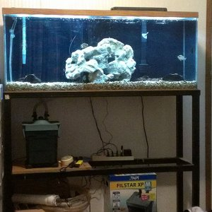 55 Gallon In The Rough